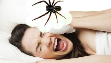 what does it mean when you dream about spiders.