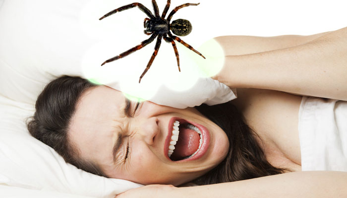 What-Does-It-Mean-When-You-Dream-About-Spiders
