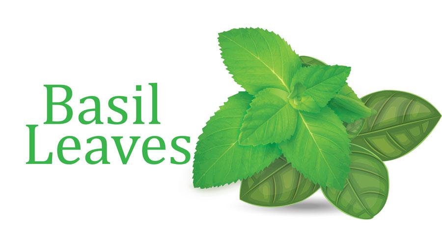 basil-leaves